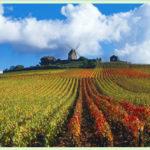 Champagne Ardennes dans l'Aube en France près de Paris
